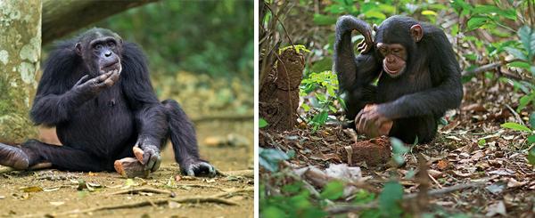 Фото №5 - 12 обезьян