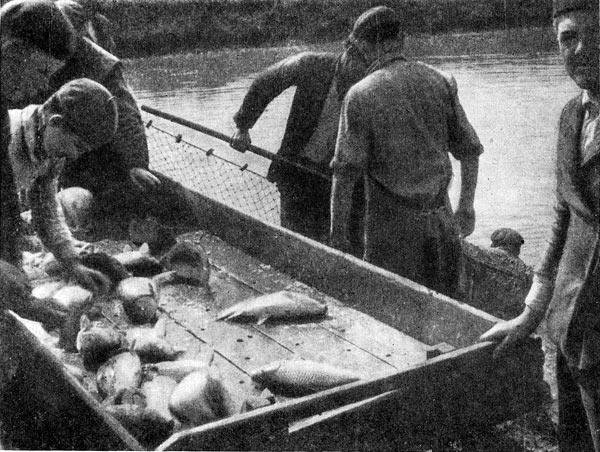 Фото №3 - Рыба в степи