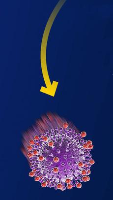 Фото №8 - Инфографика: слабые места коронавируса