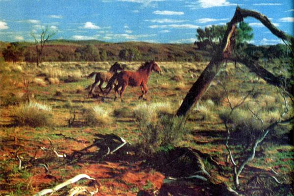 Золотое руно Австралии
