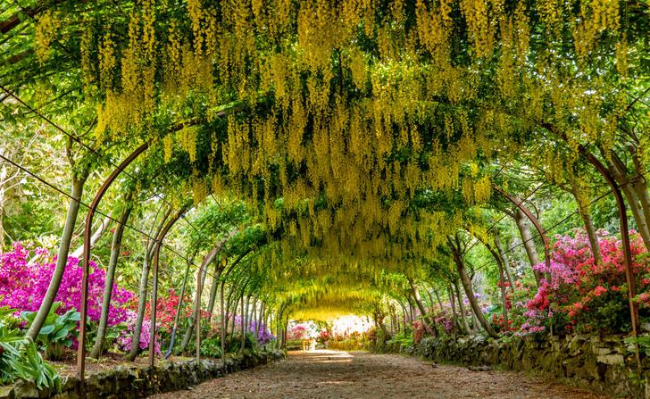 Фото №2 - Секретные миры: 7 таинственных британских садов