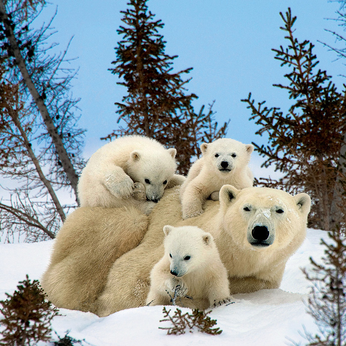 Фото №1 - Таня и медведи: как укротить зверя
