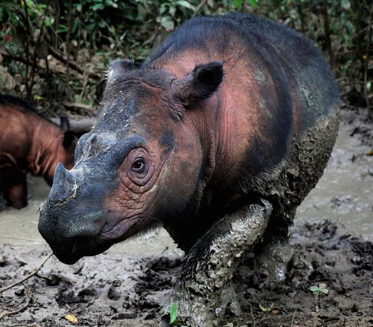 Фото №1 - Ученые предупредили об ускорении темпов исчезновения животных
