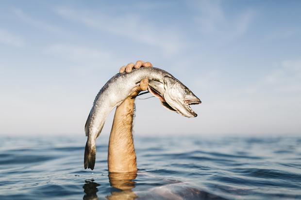 Фото №1 - Легко: ловить рыбу голыми руками