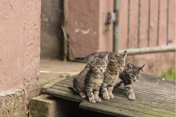 Фото №1 - Кошки способны заражать друг друга коронавирусом