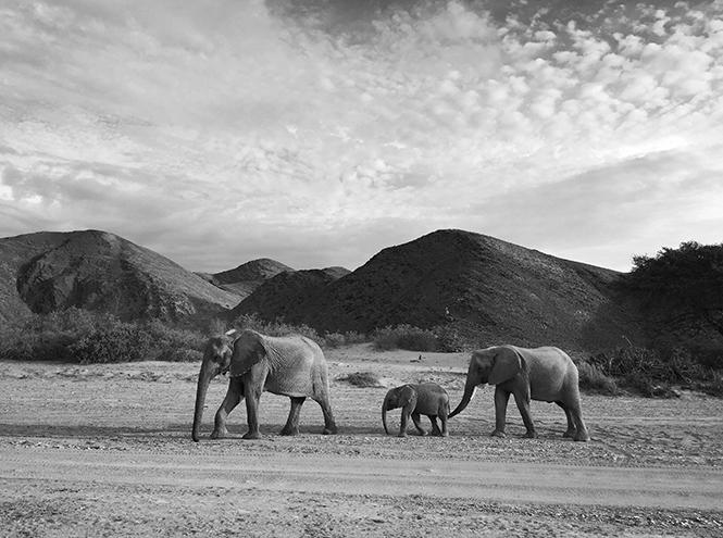 Фото №29 - iPhone Photography Awards: победители и лучшие снимки, сделанные на телефон