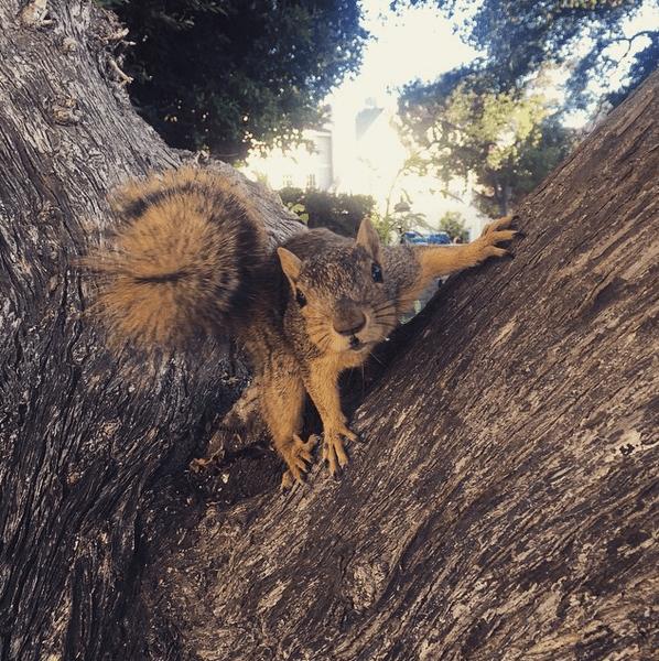 Фото №20 - Звездный Instagram: Сказки леса