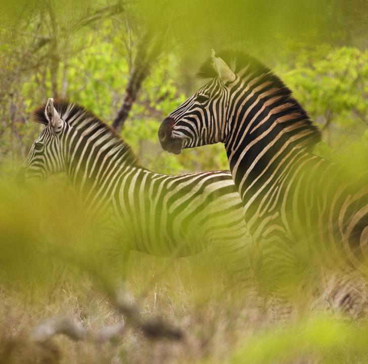 Фото №6 - Язык слонов и львов: словарь рейнджера ЮАР