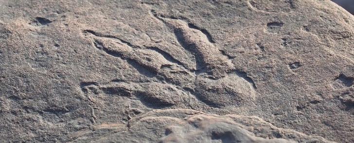 Фото №1 - 4-летний ребенок нашел след динозавра возрастом 220 миллионов лет