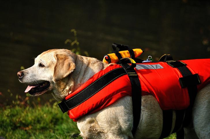 Фото №1 - Ученые провели эксперимент, чтобы узнать, действительно ли твоя собака спасет тебя в случае опасности