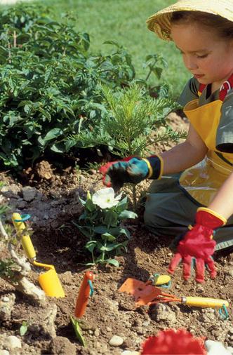 Фото №3 - Во саду ли, в огороде