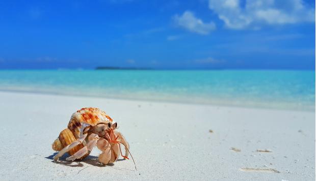 Фото №1 - Почему нельзя держать дома ракушки с моря