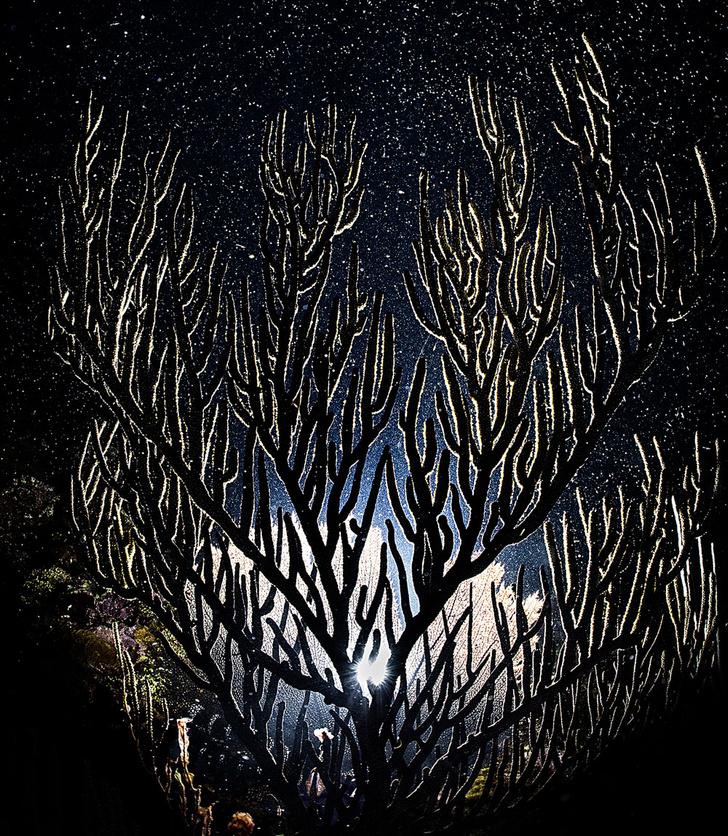 Фото №9 - Зоология: в свете полной луны
