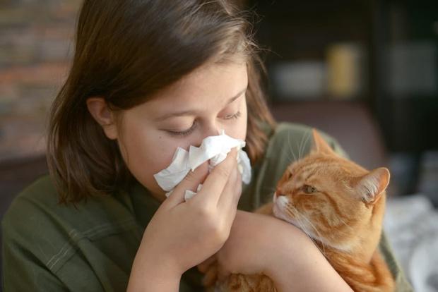 Фото №1 - Что делать, если у ребенка аллергия на кошку