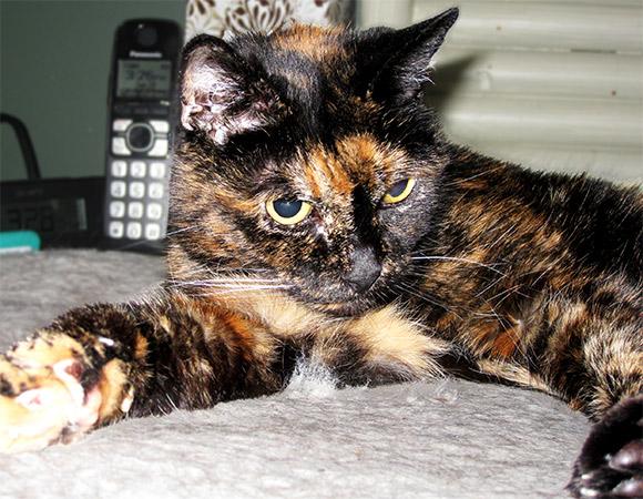 Фото №1 - В США умерла самая старая кошка в мире