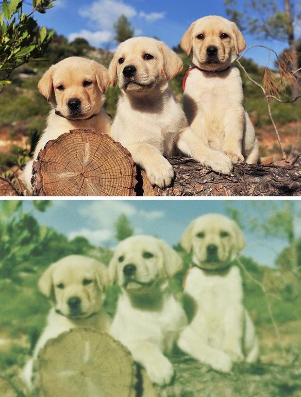 Фото №1 - Как видят мир разные животные