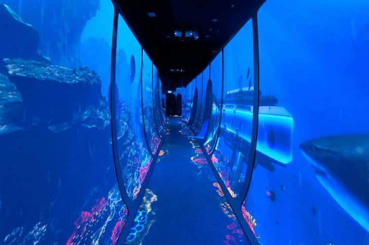 Фото №2 - «Океан юрского периода»: новая выставка о морских гигантах в «Москвариуме» на ВДНХ