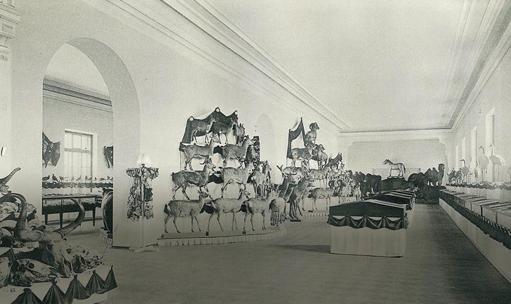 Фото №7 - Лошадь, которой нет: как возрождали исчезающих лошадей Пржевальского. Проект РГО
