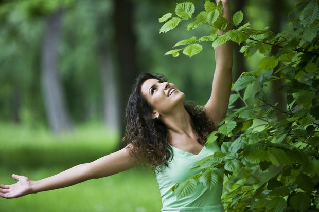 Фото №1 - Тест: стройная березка или плакучая ива— какое ты дерево?