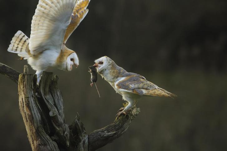 Фото №1 - Результат слепой охоты