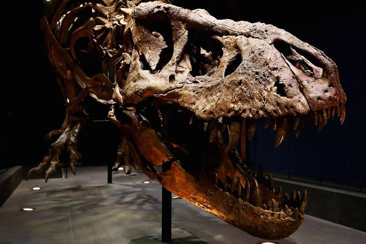 Фото №1 - Ученые выяснили силу челюстей тиранозавра