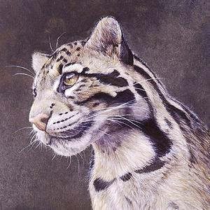 Фото №1 - Ученые нашли новый вид леопардов на Борнео