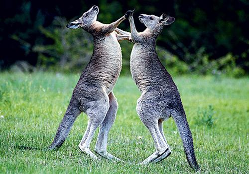 Фото №1 - Зачем млекопитающим нужен хвост?