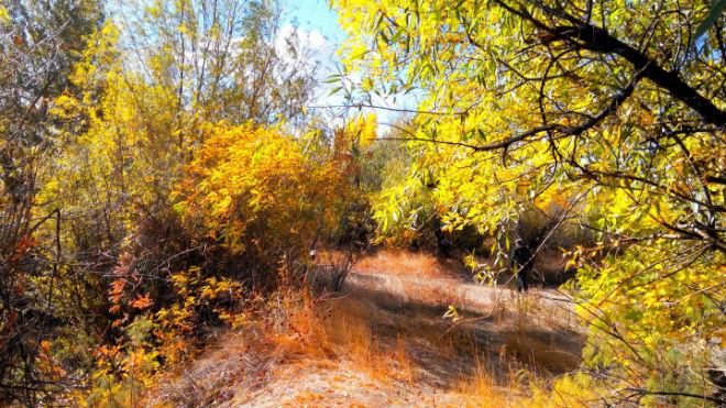 Фото №24 - 10 мест в Астрахани, где осенью – настоящая сказка!