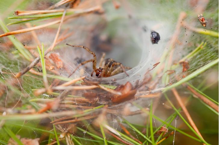 Фото №1 - Масштабное наводнение стало причиной нашествия пауков в Австралии