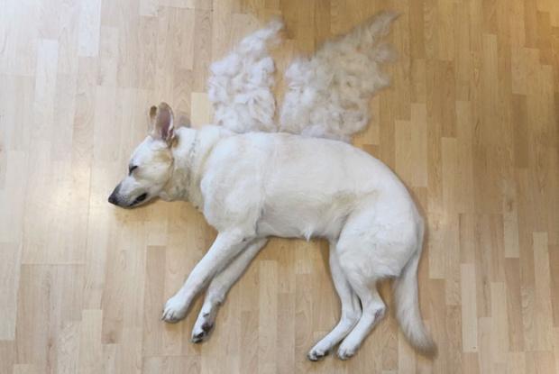 Фото №8 - Девушка создает забавные образы для своей собаки из ее собственной шерсти (много фото)