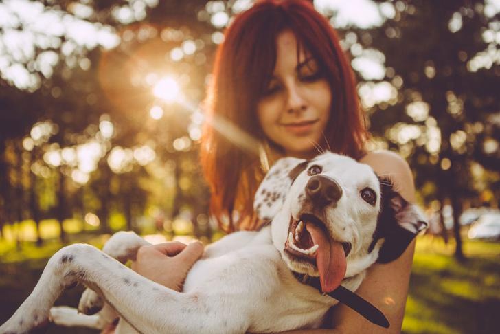 Фото №1 - Еда или ласка: ученые выяснили, что собаки любят больше