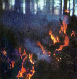 Фото №2 - Горький дым