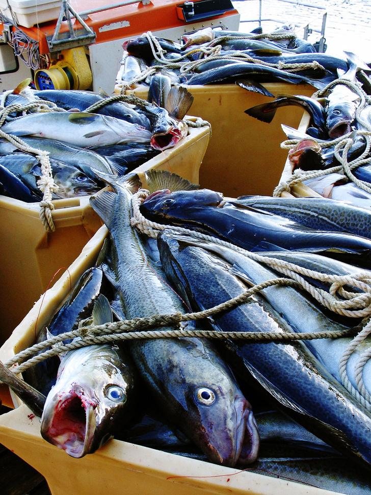 Фото №8 - Норвегия: рыбацкие сети