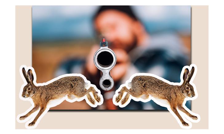 Фото №1 - Как звучит фразеологизм «убить двух зайцев» в разных странах (карта прилагается)