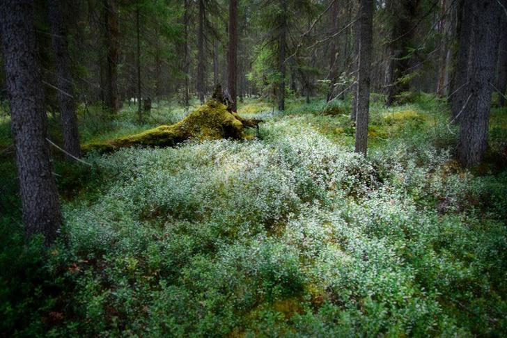 Фото №3 - Фотогалерея: лесные истории