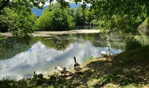 Фото №1 - Где в Ленобласти можно купаться без вреда для здоровья