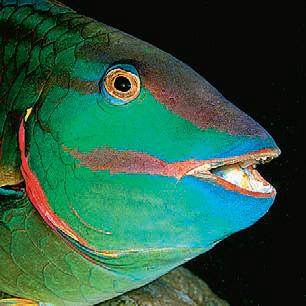 Фото №1 - Почему рыбы не моргают?
