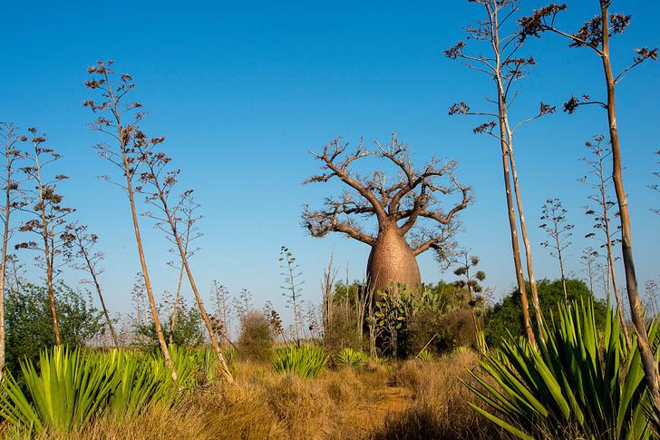 Фото №12 - Крупнейший остров-государство: путешествие на Мадагаскар
