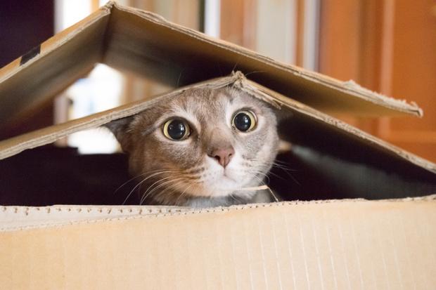 Фото №3 - 12 лучших анекдотов про котиков всех времен