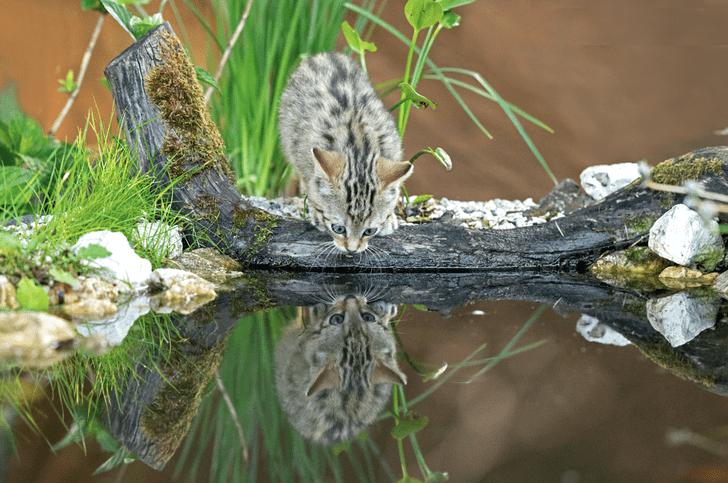 Фото №1 - Дикий котенок