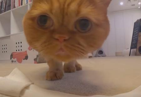 Хозяйка решила выяснить, кто из ее семи котов распотрошил сумку, и поместила в нее скрытую камеру (видео)