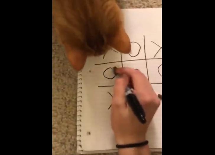 Фото №1 - Кошка играет с хозяйкой в крестики-нолики и выигрывает (видео)