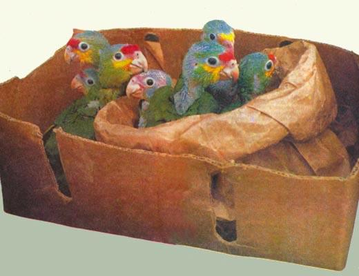 Фото №1 - Крылатые пленники