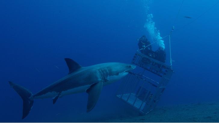 Фото №2 - Челюсти в фокусе: 5 нападений акул, которые потрясли мир