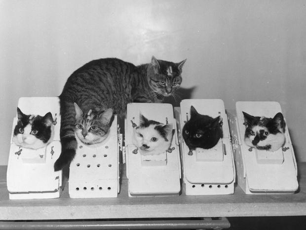 Фото №3 - Кошки, изменившие мир: 8 удивительных историй