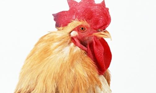 Фото №1 - Ограничения на ввоз птицы из Германии снимут в конце февраля