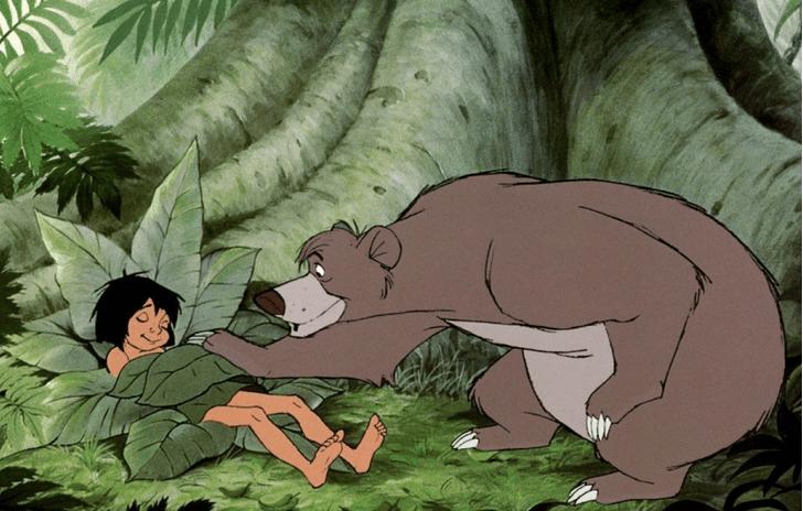 Фото №6 - 7 правил жизни медведя Балу