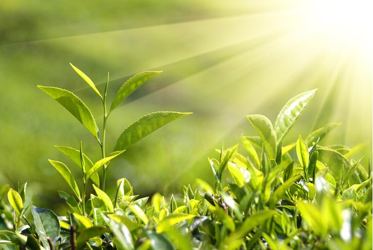 Фото №1 - Почему растения тянутся вверх?