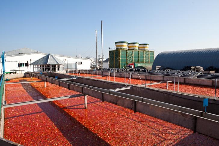 Фото №5 - Необычная экскурсия: как помидор становится томатной пастой ТМ «Помидорка»
