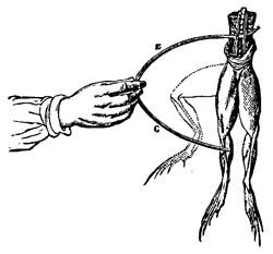Фото №2 - Исцеляющий ток в ранах